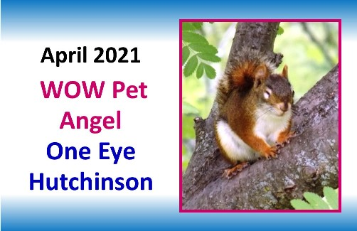 APRIL 2021 WOW Pet Angel