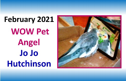 FEBRUARY 2021 WOW Pet Angel