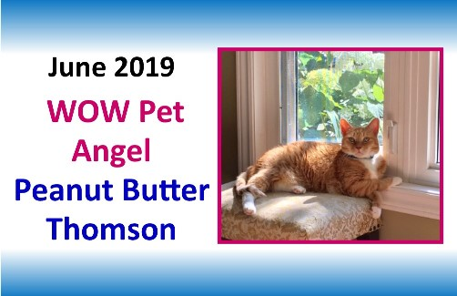 JUNE 2019 WOW Pet Angel